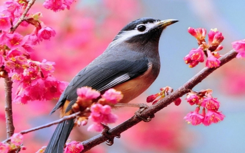 bird-on-blooming-tree-326004